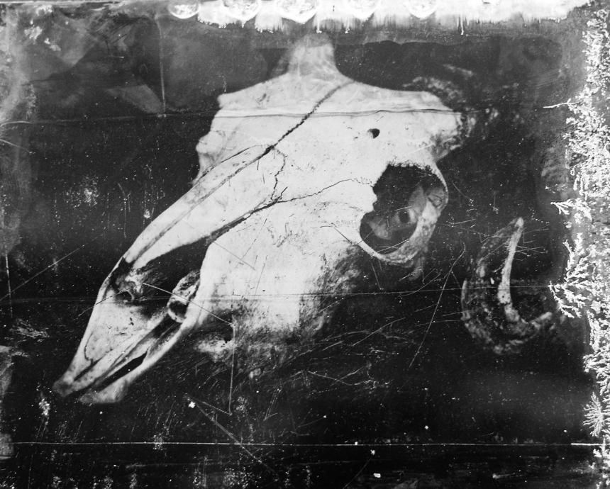 tintype of skull